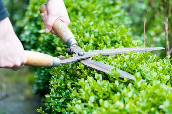 Entretien d'espaces verts et jardins